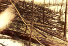 What happened in the Skies above Tunguska in 1908?