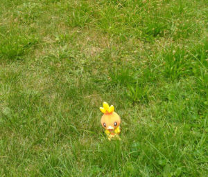 Pokemon in the wild