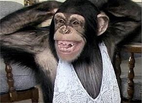 naked bonobo pussy