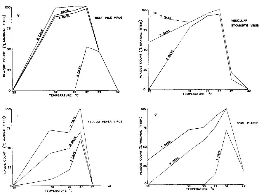Growth profiles for 4 viruses. Note how growth comes crashing down around 39 degrees C. Normal human body temperate is about 37. Graphs from Ruiz-Gomez and Isaacs 1963.