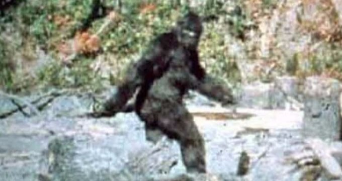 Bigfoot-Patterson-Gimlin.jpg