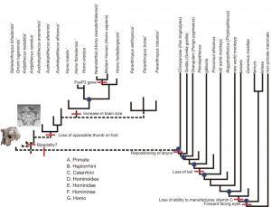 PDF  Slide 1 | Building Cladograms