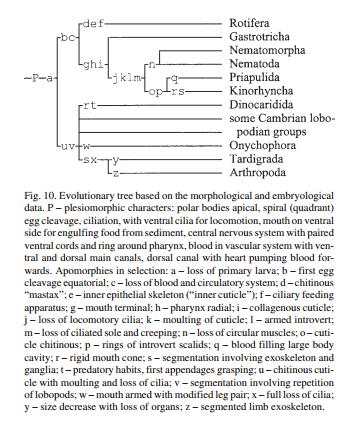 Athropod Cladogram