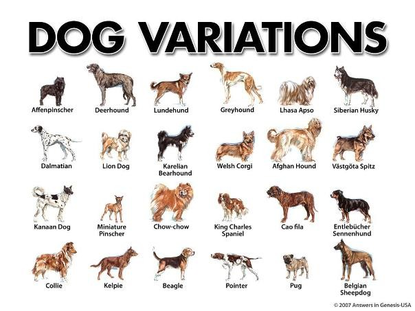 dogs_breed_names