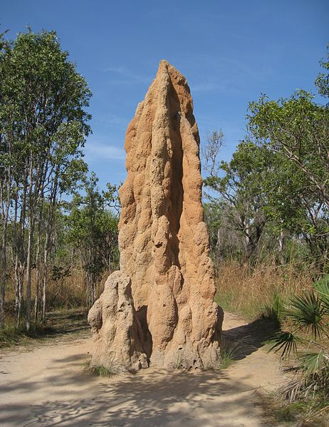 462px-Cathedral_Termite_Mound_-_brewbooks