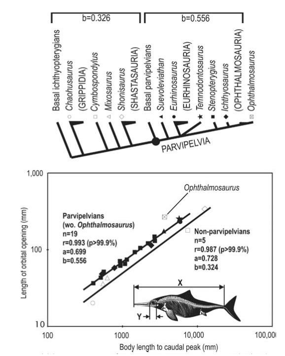 ichthyosaur eyes