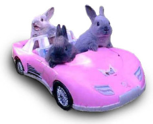 Chill Girls in Pink Corvettes, Episode #11