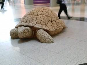 Tortoise at McCarran